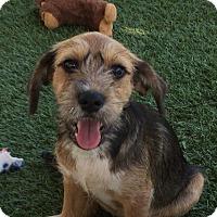 Adopt A Pet :: Joe - Orange, CA