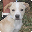 Adopt A Pet :: Bush