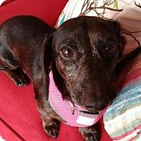 Adopt A Pet :: Cabella aka Bella in TN - Columbia, TN