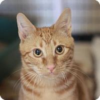 Adopt A Pet :: JAM - Kyle, TX
