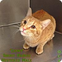 Adopt A Pet :: B-2 Lenny - Triadelphia, WV
