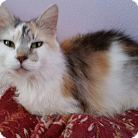 Adopt A Pet :: Patches - Middletown, OH