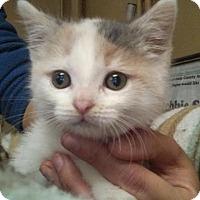 Adopt A Pet :: Sarah - Ashtabula, OH