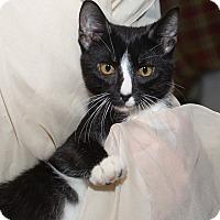 Adopt A Pet :: Scamper - Fallbrook, CA