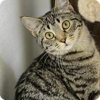 Adopt A Pet :: Bouton     162117 - Atlanta, GA