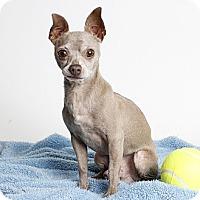 Adopt A Pet :: Ripley - Oakland, CA