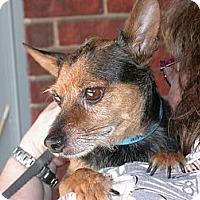 Adopt A Pet :: Silas - Waller, TX