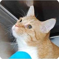 Adopt A Pet :: Rudy - Modesto, CA
