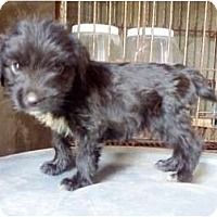 Adopt A Pet :: Jake - Richmond, VA