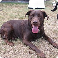 Adopt A Pet :: Kamille - Spring, TX