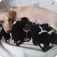 Adopt A Pet :: MADONNA - Houston, TX