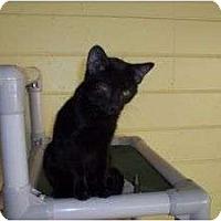 Adopt A Pet :: Becca better than evah - McDonough, GA