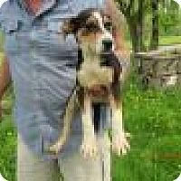 Adopt A Pet :: Pearl - Kendall, NY