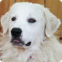 Adopt A Pet :: Mojo - Austin, TX