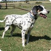 Adopt A Pet :: Minnie - Newcastle, OK