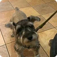 Adopt A Pet :: Storm-News! - Laurel, MD
