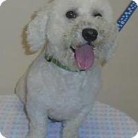 Adopt A Pet :: Einstein - Gary, IN