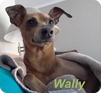 Huntsville Ontario Dog Rescue