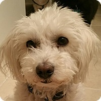 Adopt A Pet :: SPARKY - Hurricane, UT