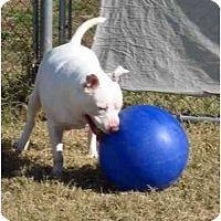 Adopt A Pet :: Sonic - Garland, TX