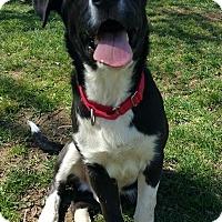 Adopt A Pet :: Gatsby - Lisbon, OH