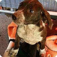 Adopt A Pet :: BEN - Gustine, CA