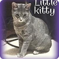 Adopt A Pet :: Little Kitty - Saint Clair Shores, MI
