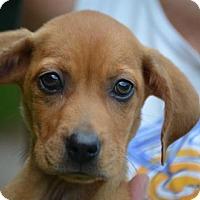 Adopt A Pet :: Sally - Doylestown, PA