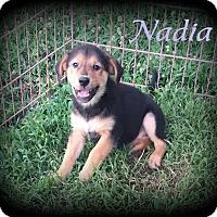 Adopt A Pet :: Nadia - Denver, NC