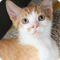 Adopt A Pet :: Brendan $45 Male - knoxville, TN