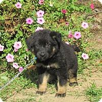 Adopt A Pet :: YANCEY - Bedminster, NJ