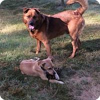 Adopt A Pet :: Rocko - Harrisburg, PA