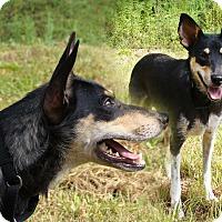 Adopt A Pet :: Lizzie - Waynesboro, TN