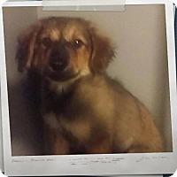 Adopt A Pet :: Mitsy - Mesa, AZ