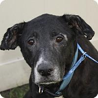 Adopt A Pet :: Missy - Jackson, MI