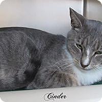 Adopt A Pet :: Cinder - Jackson, NJ