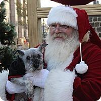 Adopt A Pet :: Maxx - Millersville, MD