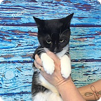 Adopt A Pet :: TOBIAS - Hibbing, MN