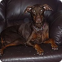 Adopt A Pet :: Stryder - Hamilton, ON