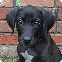 Adopt A Pet :: *Bodie - Westport, CT