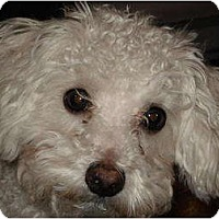 Adopt A Pet :: Bailey - Rigaud, QC