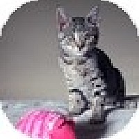 Adopt A Pet :: Noomi - Vancouver, BC