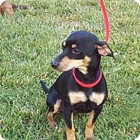 Adopt A Pet :: Black Jack - Brattleboro, VT