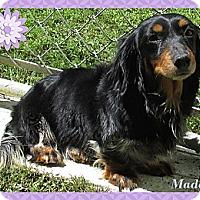 Adopt A Pet :: Maddey - Conroe, TX