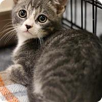 Adopt A Pet :: Tommy - Sacramento, CA