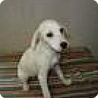 Adopt A Pet :: Mandy in CT - East Hartford, CT