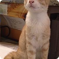 Adopt A Pet :: Oscar - Bentonville, AR