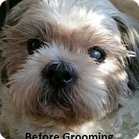 Adopt A Pet :: TYLER - Jackson, NJ