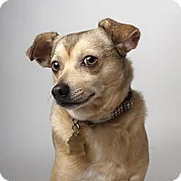 Adopt A Pet :: Justin - Pitt Meadows, BC