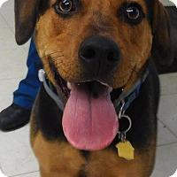 Hound (Unknown Type) Mix Dog for adoption in Rockville, Maryland - Mallomar